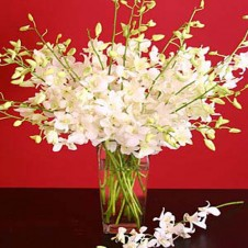 12 stems of white Dendrobium Orchids in a Vase