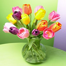 Greets Tulips in a Vase