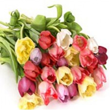 10 pcs Multi Colored Tulips in a Bouquet