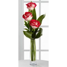 3 stems Holland Two Tone Roses Vase
