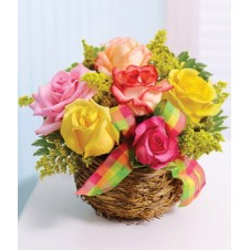 6pcs Assorted Colors Holland Roses in a Basket