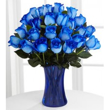 Three Dozen Blue Holland Roses in a Vase
