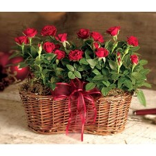 Enjoy the Rose Basket