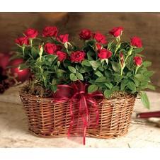 Enjoy the Rose Basket