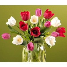 Celebrate the Season with Beautiful 10 Tulips