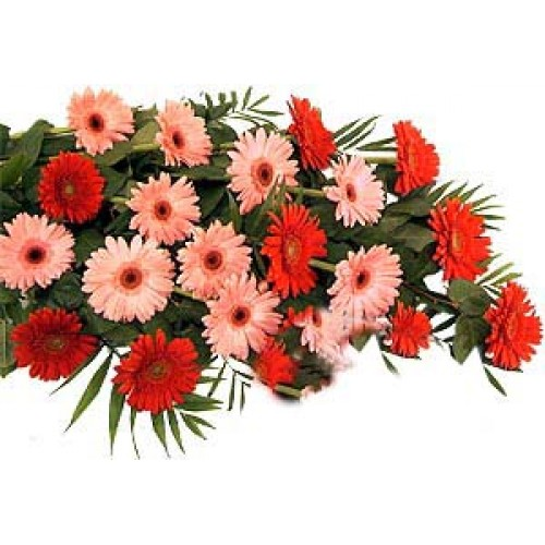 Pretty Pink and Red Gerbera Daisies in a Bouquet