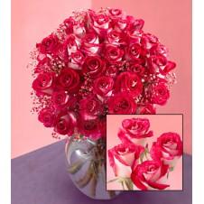 Dazzling Pink Roses in a Vase