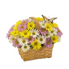 A Nice Basket of Daisy