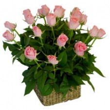 2 dozen Pink Roses in a Basket