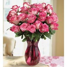 2 dozen  Pink Roses  in a Vase