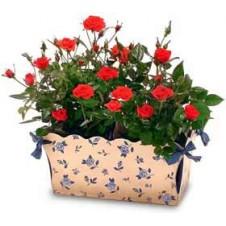 Beautiful Miniature Roses in a Basket**