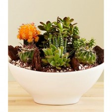 Contemporary Cactus Design