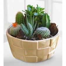 Desert Daydreams Cactus dish Garden