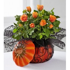 Bewitching Beauty Halloween Mini Rose