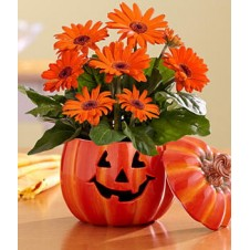 The Great Gerbera Pumpkin in a Pumpkin Vase