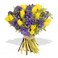 Great Yellow Tulips w/ Purple Flower