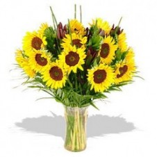 Two Dozen Sunflower in a Vase with Greeneries