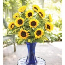 One Dozen Sunflower in a Vase