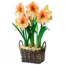 5pcs Cut Orange Lilies in a Basket