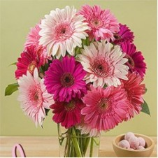 1 Dozen Mixed Gerbera in a Vase
