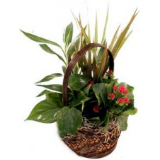 Send This Arrangement Of Plants In A Basket