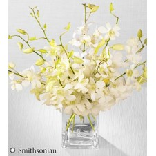 White Whispers in a Vase