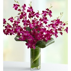 Orchid Embrace in a Vase